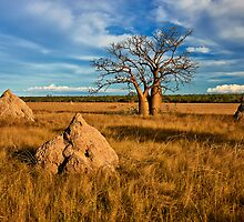 Ant Nest Sentinels - Kimberley WA by Ian English