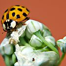Yellow Bug by saseoche