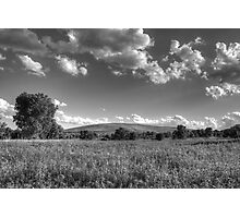 Field of Tranquility Photographic Print