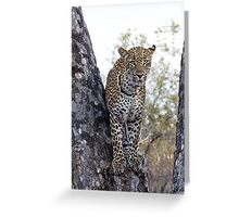 Looking For My Daughter Greeting Card