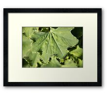 Bejewelled Framed Print
