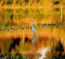 Abstract Egret by Adam Kuehl