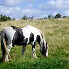 Piebald Horse Grazing on Grassy Hill by Lisa Marie Robinson
