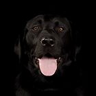 Black labrador iPad case by paulwhittle