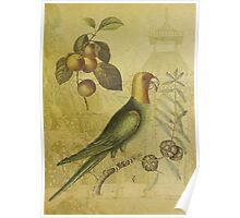 Parrot with Plums Poster