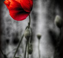Poppy by Darren Allen