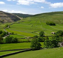 Summer Fields at Arncliffe by Kat Simmons