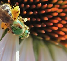 Green Bee Macro by Keala