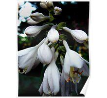 White Purple Bells Poster