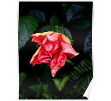 Hibiscus Flowering Bud Poster