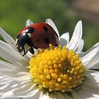 Ladybird 12 by Magic-Moments