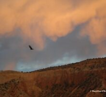 Turkey Vulture Circles Ghost Ranch at Sundown by MaryEllen O'Brien