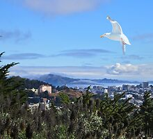 San Francisco from Diamond Heights by David Denny