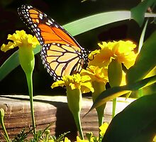 Monarch with Marigolds by Nadya Johnson