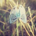 Little Butterfly by tropicalsamuelv