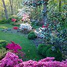 Linda's garden by nealbarnett