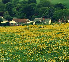 Buttercup Field by Cherry Franklin