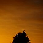 sunset by Ryanpk