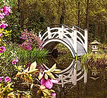 White Arched Foot Bridge by Terry Shoemaker