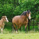 Mare & Foal by M.S. Photography/Art