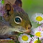 Flowers and Squirrel by Carolyn Clark