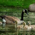 Mom and babes by Linda Pollock