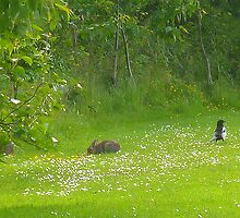 The Rabbit and the Magpie in a meadow by Antoinette B