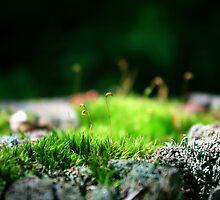 Moss Wonderland by Zenshun