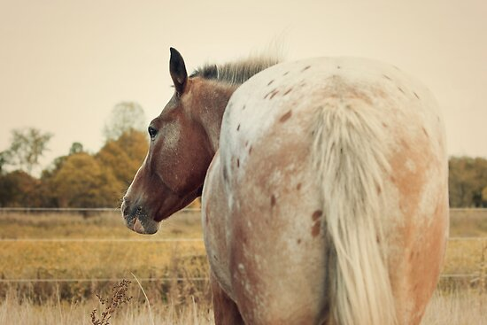 Appaloosa Horse Spots by jamieleigh