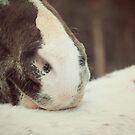Appaloosa Horse Nose by jamieleigh
