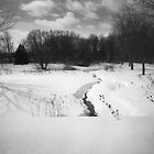 Pinhole Study: Winter in Waterloo No. 2 by Max Buchheit
