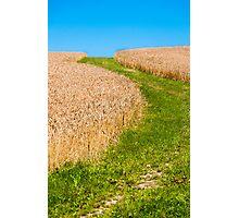 Winding Green Path through Golden Grains Photographic Print