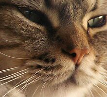 Close Up Cat 3 by spoilmesweetie
