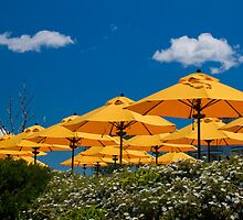 USA. Maine. Bar Harbor. Yellow Umbrellas. by vadim19