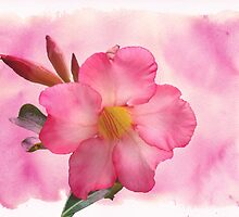 Hot Stuff - Pink Mandevilla Vine by MotherNature2