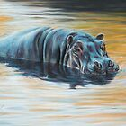 'The dance of morning light - River Hippopotamus' by steve morvell