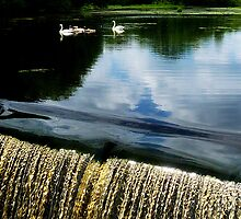 Swan Lake... by LindaR