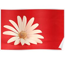 White flower in red background Poster
