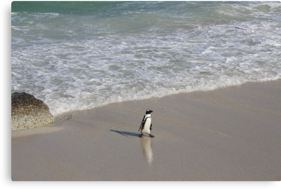 Penguin 3-Way in South Africa by Ren Provo