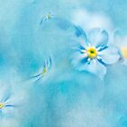 Forget-me-not by Svetlana Sewell