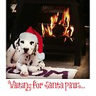 Waiting for Santa Paws... by ollysdirection