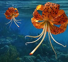 Octo-Flower Jelly-Pus by Elizabeth Burton