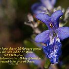 Luke 12:27 (day 9) by tonysphotospot