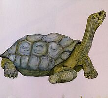 Galapagos Tortoise Painting by andisenior