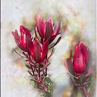 Red Protea by Elaine Teague
