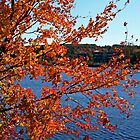 Fall at Sudbury Reservoir by Ren Provo