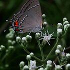 Little Gray Moth by Karen Harrison