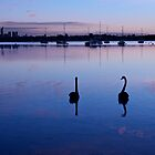 Black Swans by Mark  Nangle