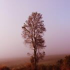 Standing alone in the fog by Donuts