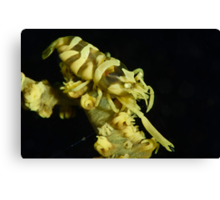 Yellow Zanzibar Shrimp Canvas Print
